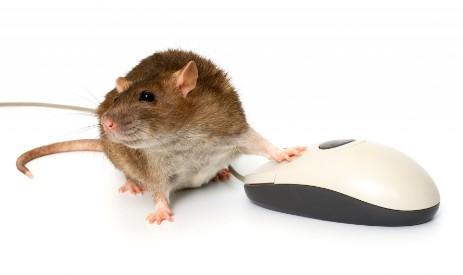 Maus Mit Computermaus